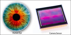 Human Eye vs Digital Camera Sensors